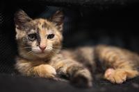 子猫の風格 - 節操のない写真館