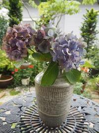 紫陽花いろいろ - グリママの花日記