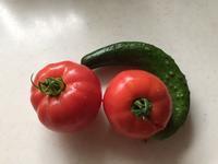 雨の中で収穫 - わたしの好きな物