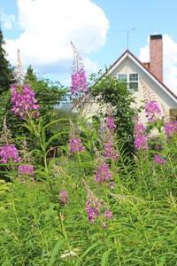 夏の花♪ヤナギランが咲く庭 - ペコリの庭 *
