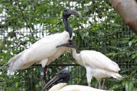 多摩動物公園ひな祭り~ウォークインバードケージのヒナたち【前編】 - 続々・動物園ありマス。
