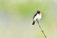 高原の野鳥① - expeedのbirdisland あの日あの時あの場所で・・・volⅡ