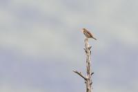 高原の野鳥② - expeedのbirdisland あの日あの時あの場所で・・・volⅡ