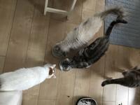 猫さま色々♪ - 土筆の庭