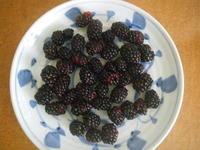 ブラックベリーを収穫7/16 - つくしんぼ日記 ~徒然編~