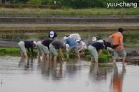 備中国分寺赤米田植えの準備 - 下手糞でも楽しめりゃいいじゃんPHOTO BLOG