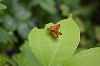 スジグロチャバネセセリ他7月15日 - 超蝶