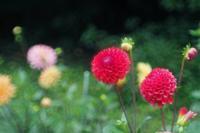 雨の昭和記念公園6 - 光の音色を聞きながら Ⅳ