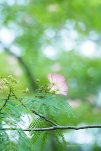 夢見る花 - jumhina biyori*