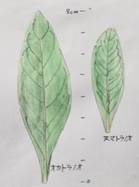 #比べる #見分ける 『#植物スケッチ』 - スケッチ感察ノート (Nature journal)