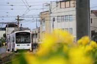 阪堺電車スナップ② - 鉄男の部屋