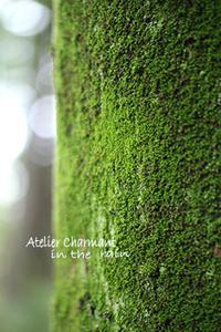 雨の日は苔観察 - Atelier Charmant のボタニカル・水彩画ライフ