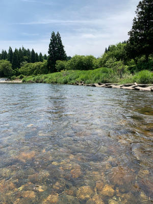 桧木内川の美肌鮎が忘れられなくて… - 漁師です・・・