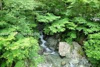 オオヤマレンゲに会いに行こう!(1)7月7日撮影 - ratoの山歩き