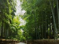 竹林公園 - 写真を主とした日記です
