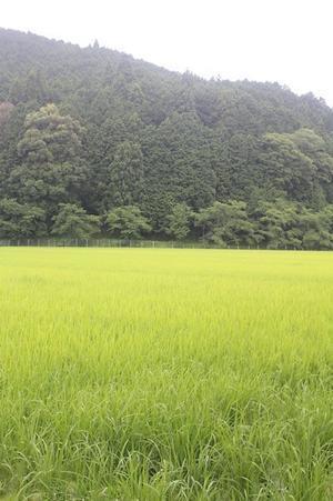 お米 の 葉っぱ - shara - rin ♪ stick!