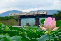 日田彦山線2019夏(蓮の花編) - ポン太の写真帳別館