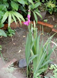 庭で咲く花 - 【出逢いの花々】