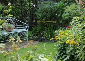 暑さが苦手な薔薇の2番花 と 暑さが好きなカンナ - miyorinの秘密のお庭