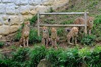 全員揃いは難しい - 動物園に嵌り中2