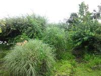 夏の庭 - だんご虫の花