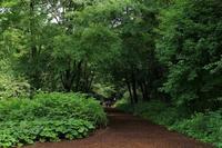 緑烟る赤城自然園・・・梅雨の晴れ間に - 『私のデジタル写真眼』