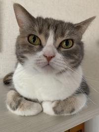 「猫ですけど、何か?」 - 土筆の庭