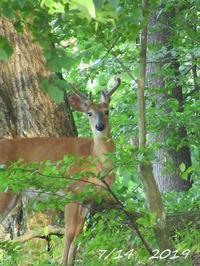 森の動物と自然保護 - NYからこんにちは