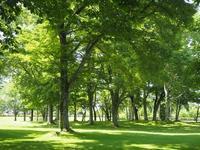 涼やかな自然文化園の木陰 - 原村 ペンション八ヶ岳ゲストハウス