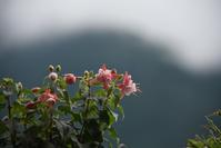 梅雨の雲を背景に - (=^・^=)の部屋 写真館