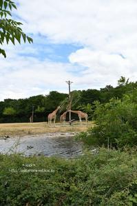 初めてのヨーロッパ遠征 - 動物園でお散歩