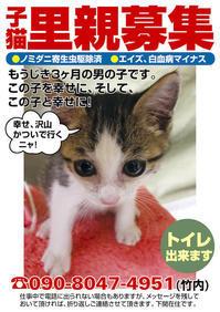 子猫の里親募集 - 駄猫と本の部屋 ぶらん亭