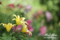 ゆり - Flores*Flores