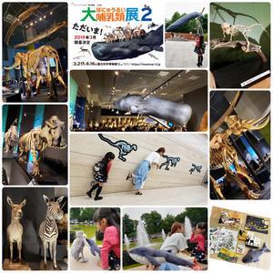 「大哺乳類展2」と、クジラ王子。 - 『ちぃちゃん家のちくびウサギ。』(安間千紘公式ブログ)