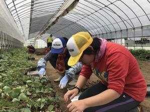 地域貢献型農福連携W請負作業・ポット作りほか - ジョブファーム活動ブログ