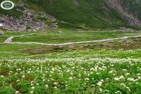 乗鞍岳でお花がモリモリ咲いています♬ - 乗鞍高原カフェ&バー スプリングバンクの日記②