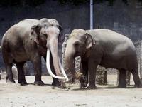 暑き日のボンとヨーコ - 動物園放浪記