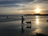 早く砂浜でアーシングしたいなあ - パームツリー越しにgood morning        アロマであなたの今に寄り添うブログ