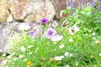 花壇を撮りました。 - 平凡な日々の中で