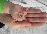 赤い風船 - 発展途上国の子供を救え!小児外科医吉岡秀人の戦い