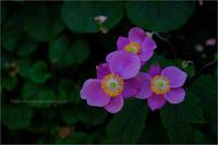 熱帯の花 - りゅう太のあしあと