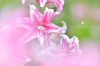 明るい色で - お花びより