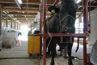 OPU(経膣採卵)の練習 - 小比類巻家畜診療サービス スタッフの牧場日誌
