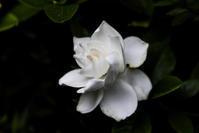 香りの記憶 - memory
