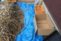 今年も無事ニンニクの収穫が終わりました! - かけっこ日記