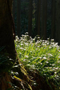 シャガ咲く森 - katsuのヘタッピ風景