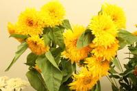 今日の店内7.19 - 北赤羽花屋ソレイユの日々の花