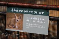 井の頭自然文化園2019年7月15日 - お散歩ふぉと2