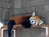 浜松市動物園の旅行記を姉妹ブログ「レッサーパンダ紀行」にアップしました - (続)レッサーパンダ紀行
