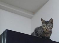 ちょこっと大阪 - 素人木工雑貨と犬猫日記